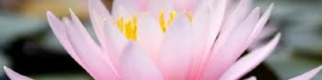 cropped-pinklotus32